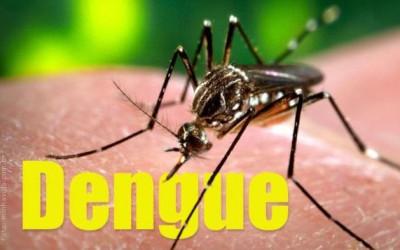 O mosquito transmissor do vírus e suas larvas nascem e se criam em água parada
